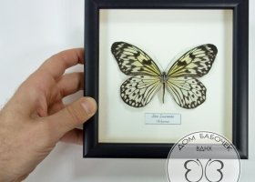Бабочка Идея в рамке