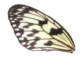 Idea wing (upper/lower)