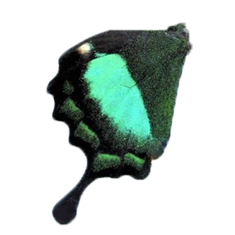 Нижнее крыло Палинур