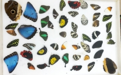 50 different butterfly wings