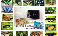 Премиум: 15 куколок + Ферма бабочек