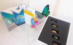 Premium: 15 pupa + butterfly farm